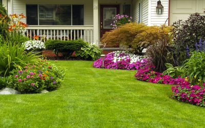 5 Reasons to Keep Your Lawn Healthy