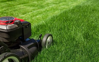What Is Overseeding? How to Properly Seed a Lawn